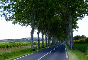 road_around pezenas