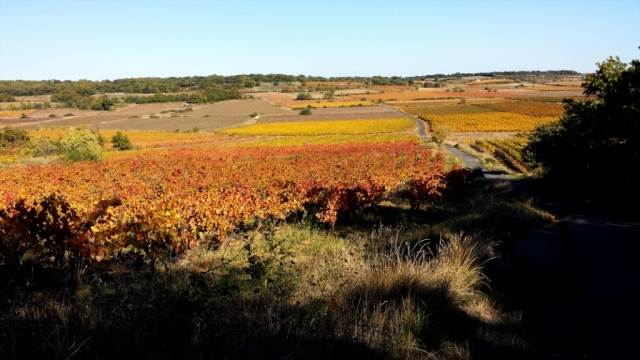 Road through the vineyards near Caux, Languedoc in Autumn