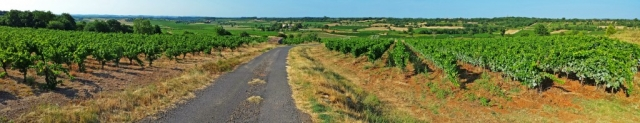 Panoramic view of vineyards near Caux, Languedoc