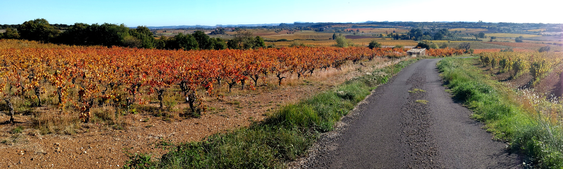 Panoramic view of Languedoc vineyards in fall