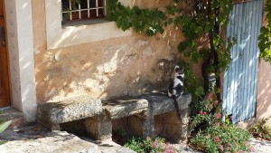 Provence: Cat in Bedoin