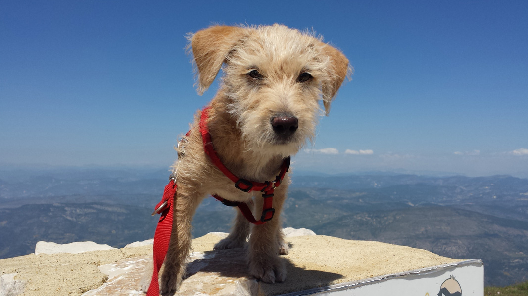 King of the Mountain, Mont Ventoux