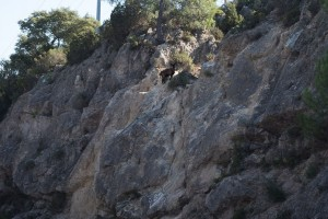 Wild goat on the rocky hills near Moureze, Languedoc