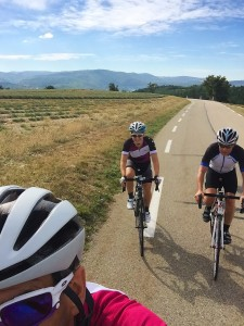 Cycling through the lavender field at the base of Mont Ventoux