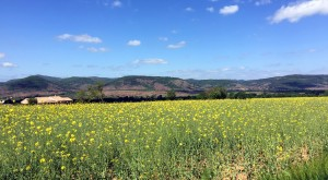Springtime cycling - fields in bloom at Lac Salagou, Languedoc