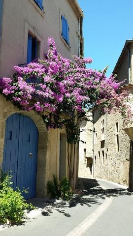 Flowering Bougainvillea, Pezenas, Languedoc