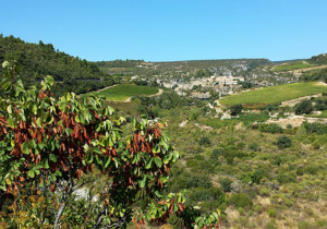 Distant View of Minerve, Languedoc: from my bike